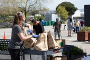 "A volunteer distributes bags of food to people in need who walked up to the Alameda Food Bank distribution center in Alameda, CA, on April 15, 2019. The food was distributed through a drive-through to people in need following the loss of their jobs due to the ""shelter-in-place"" order to limit the spread of the coronavirus SARS-CoV-2."